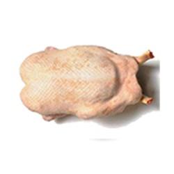 Pato Holandés